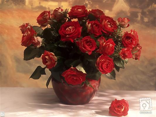 گلدان گل رز گل رز رزقرمز