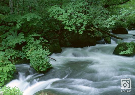 عکس منظره جنگل